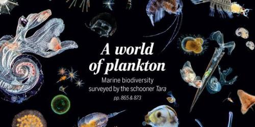 Couverture de la revue Science du 22 mai 2015 consacré au plancton et aux premiers résultats scientifiques de l'expédition Tara Oceans